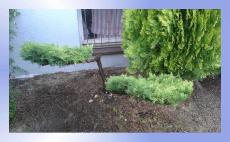 usługi ogrodnicze pielęgnacyjne