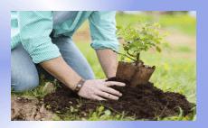 pielęgnację i regenerację trawników